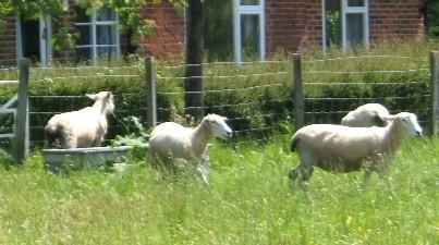 Neighbours, everybody needs good neighbours!